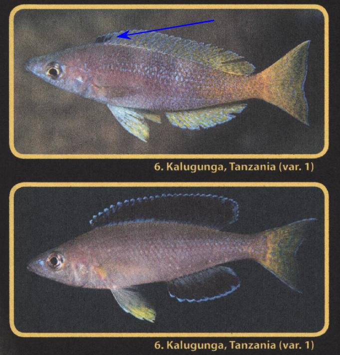 kalugunga book 2.png